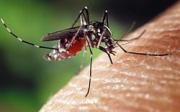 Domácí léčba štípanců od komárů