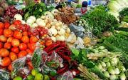 Jak připravit půdu pro pěstování zeleniny