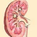 Oslabené ledviny