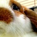 Ukázkové druhy středních plemen králíků chovaných pro jejich krásu